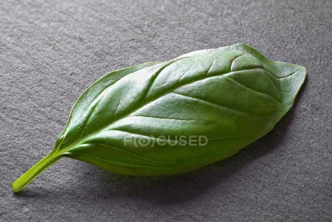 Frische grüne Basilikum — Stockfoto