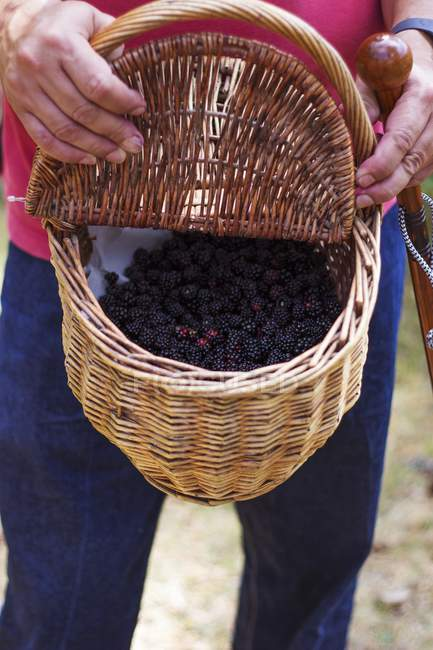 Man holding basket of blackberries — Stock Photo