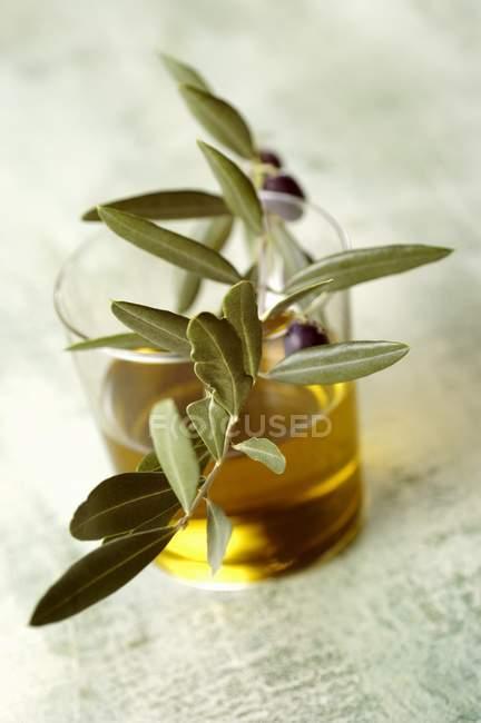 Un vaso de aceite de oliva con una ramita de olivo - foto de stock