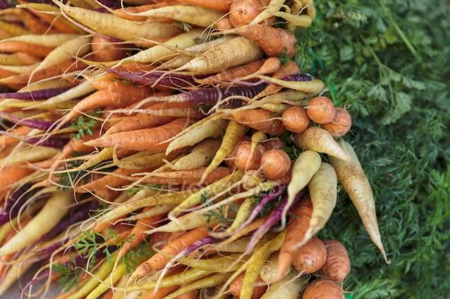 Zanahorias de patrimonio en el mercado - foto de stock