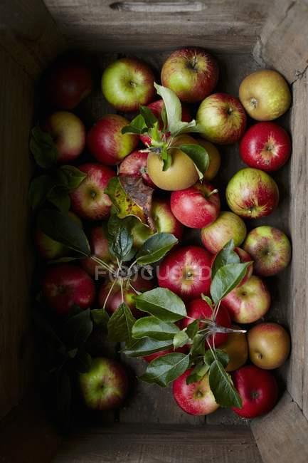 Mele fresche crude — Foto stock