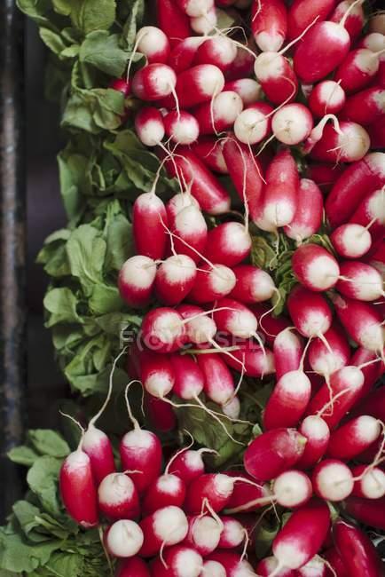 Bundles of fresh radishes — Stock Photo