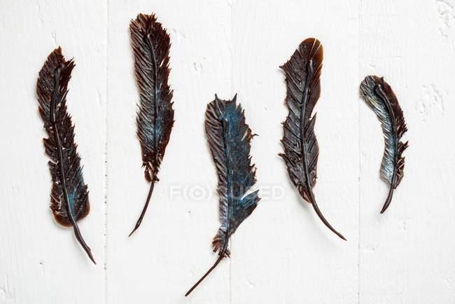 Крупным планом вид пяти шоколад перьев на белой поверхности — стоковое фото