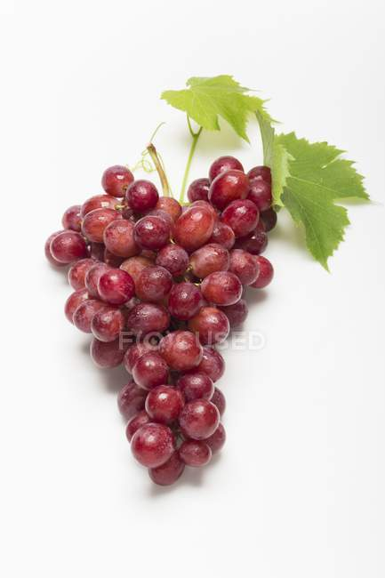 Red grapes with a leaf — Stock Photo