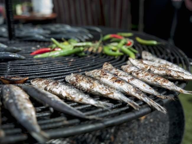 Сардины и перцем чилли — стоковое фото