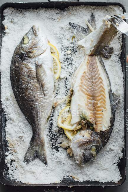 Baked gilt-head bream — Stock Photo