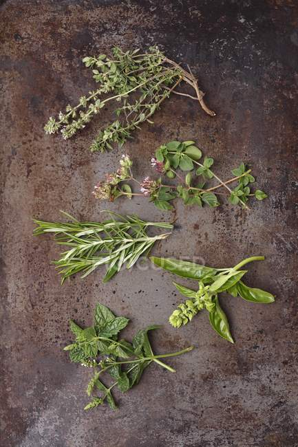 Fresh herb sprigs — Stock Photo
