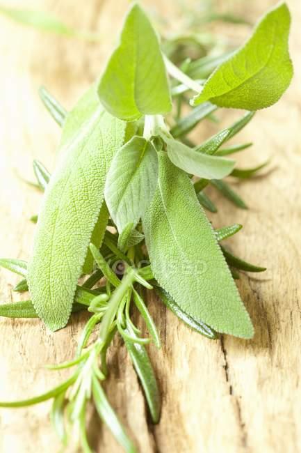 Fresh sage and rosemary — Stock Photo