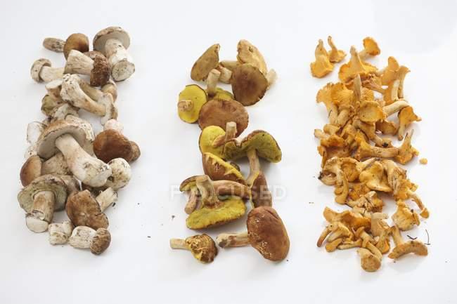 Reihen von verschiedenen Speisepilzen — Stockfoto