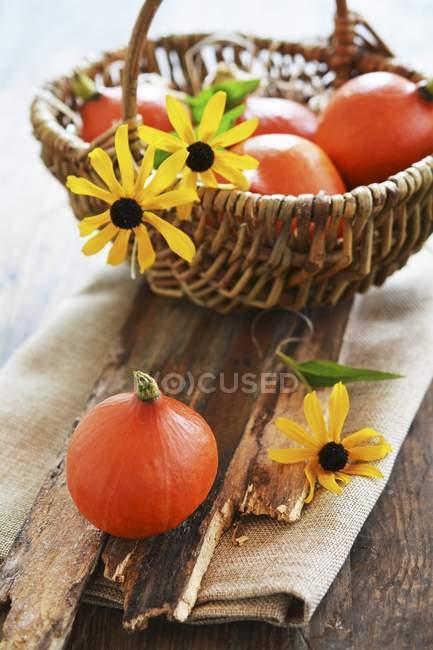 Small hokkaido pumpkins — Stock Photo