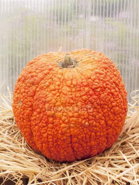 Необычные Оранхель тыквы — стоковое фото