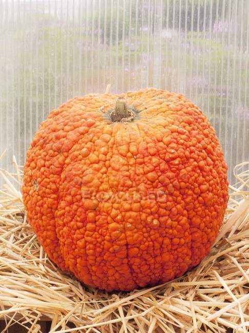 Unusual orangel pumpkin — Stock Photo