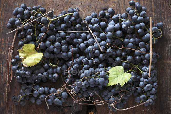 Black grapes with vine leaves — Stock Photo
