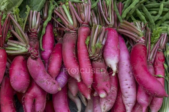Fresh Pink radishes — Stock Photo