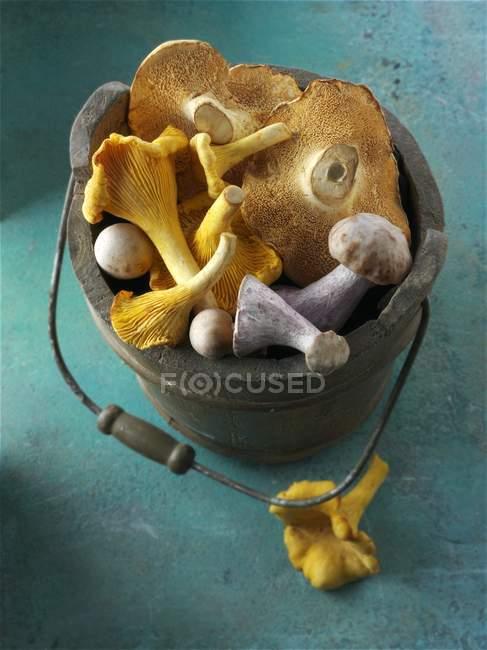 Champiñones de cantarela recién recogidos - foto de stock