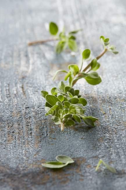Fresh marjoram sprigs — Stock Photo