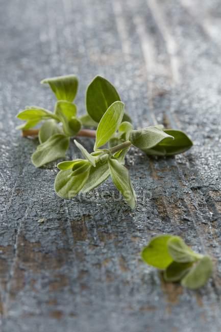 Raminho de manjerona fresca — Fotografia de Stock