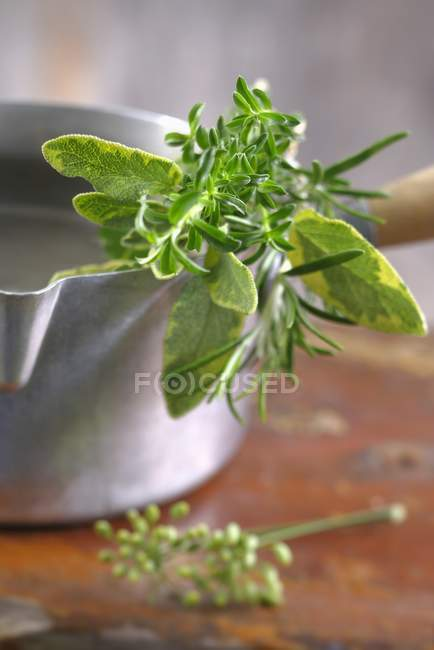 Surtido de hierbas frescas - foto de stock