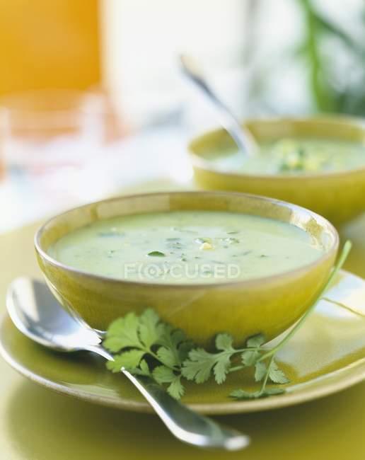 Creme von Zucchini-Koriander-Suppe — Stockfoto