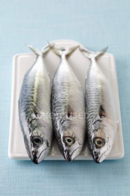 Сирої риби на Розробні рада — стокове фото