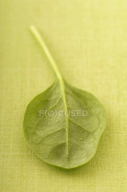 Folha de espinafre bebê — Fotografia de Stock