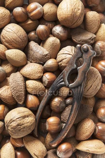 Verschiedene Nüsse und Nussknacker — Stockfoto