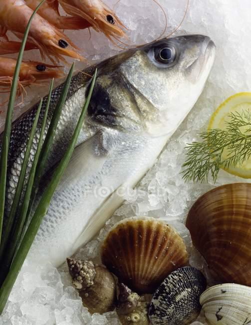Bass, crevettes et coquillages sur glace — Photo de stock