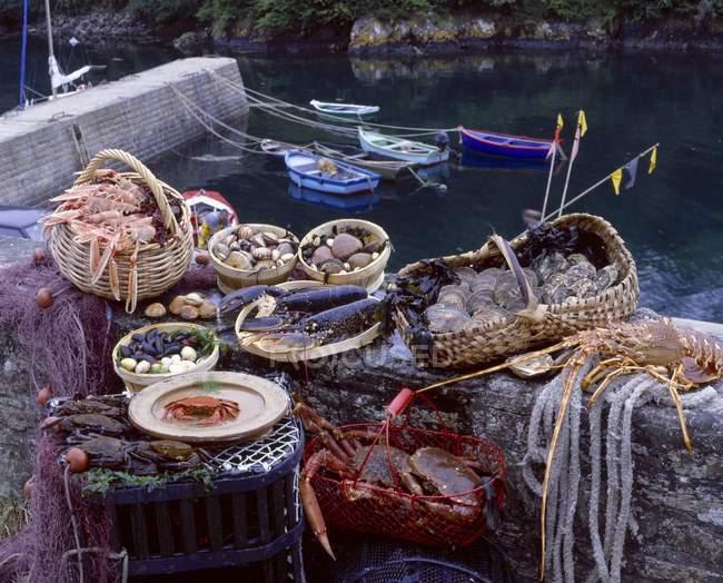 Vue diurne des langoustes, des crabes et des coquillages attraper avec des filets sur le rivage de la rivière — Photo de stock