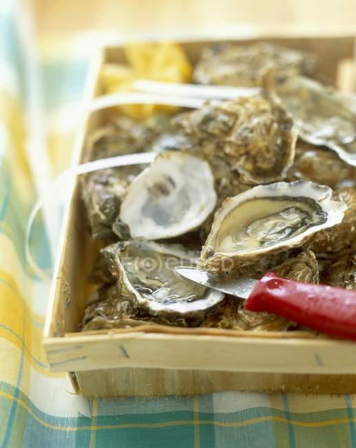 Kiste mit frischen Austern — Stockfoto