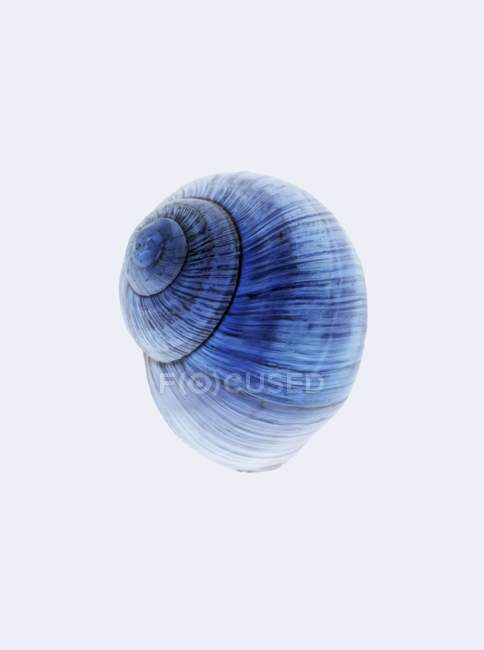 Closeup view of one blue snail shell on white background — Stock Photo