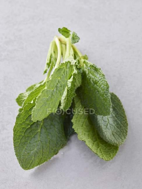Closeup vista de borragem fresca folhas sobre um fundo cinzento — Fotografia de Stock