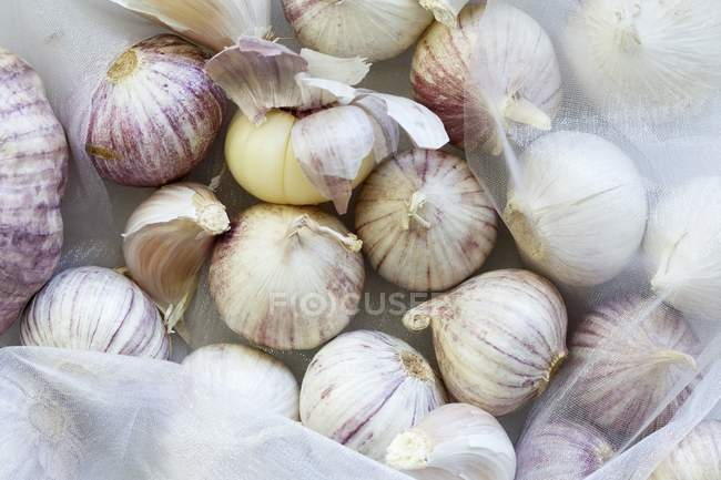 Purple garlic heads — Stock Photo