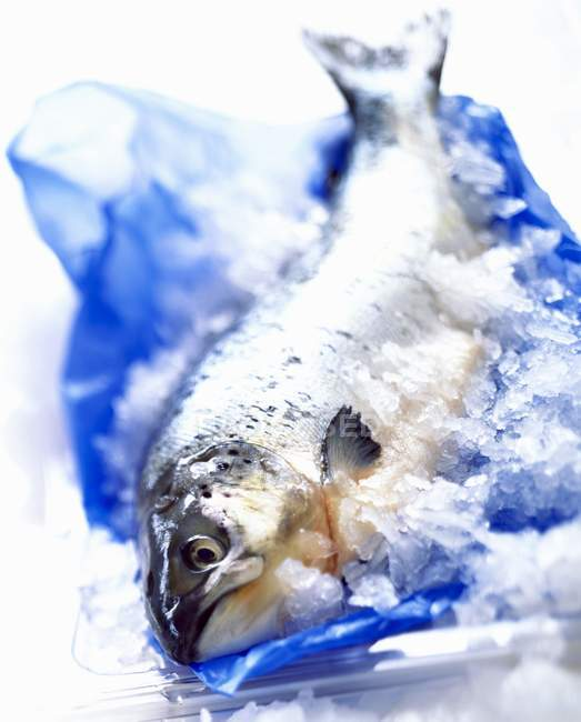 Fresh raw Trout in ice — Stock Photo