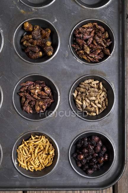 Вид зверху сушені макухи хробаків, королева Leafcutter мурашки, Chapulines, цвіркунів, Mopane черв'яків і Chapulines — стокове фото