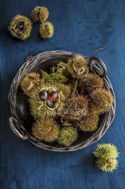 Vista superior do espinhosas castanhas em uma cesta — Fotografia de Stock