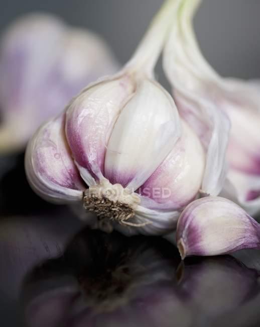 Глава свежий чеснок — стоковое фото