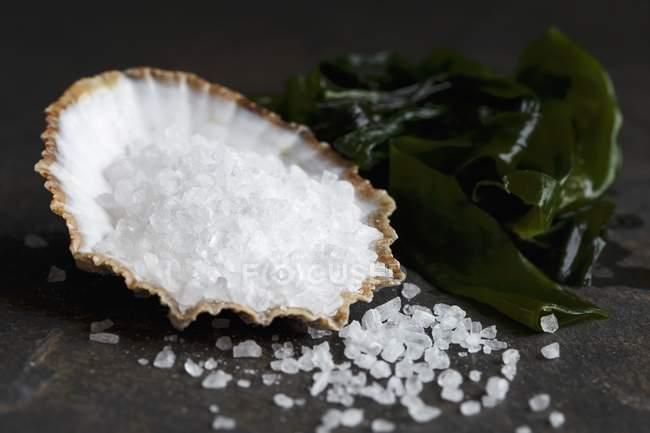 Grobes Salz in einer Muschel — Stockfoto