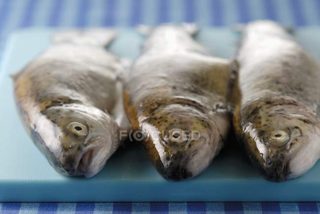 Fresh raw trouts — Stock Photo