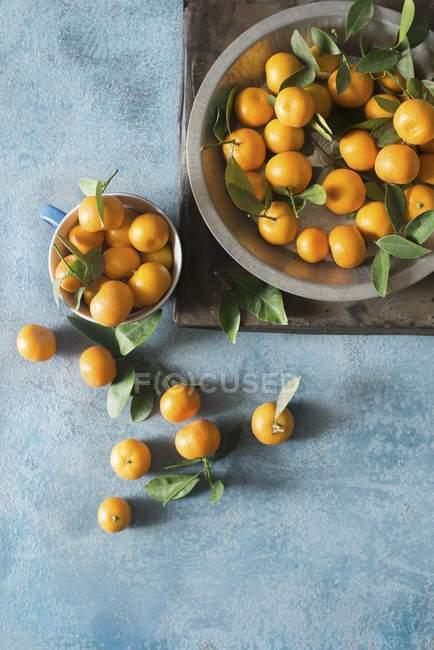 Свіжі мандарини клементини з листям — стокове фото