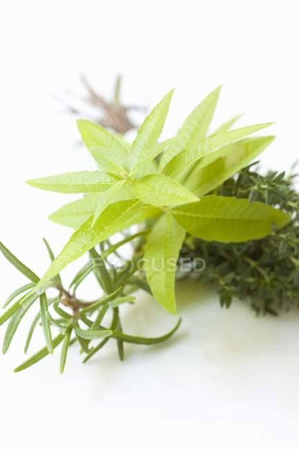 Bouquet de hierbas con Romero - foto de stock