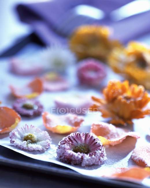 Closeup view of crystallized sweet flowers — Stock Photo