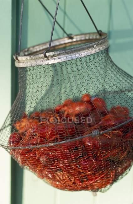 Visão de close-up das capturas de caranguejos em cesta de arame — Fotografia de Stock