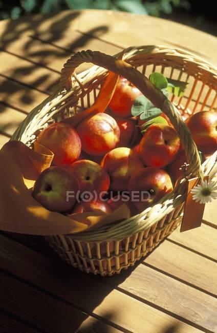 Basket of fresh picked nectarines — Stock Photo