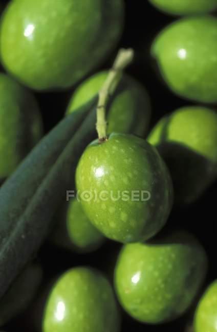 Azeitonas verdes com folha — Fotografia de Stock