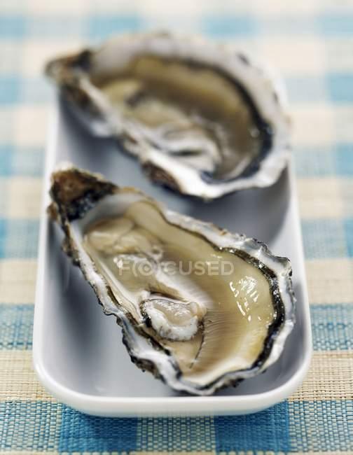 Frische Austern in Platte — Stockfoto