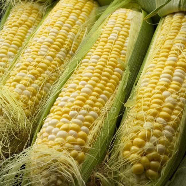 Bicolor de milho doce — Fotografia de Stock