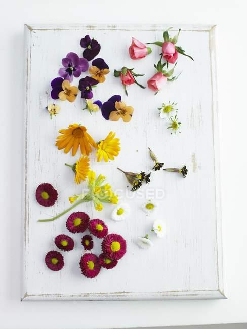 Вид сортированных съедобных цветов на белой деревянной доске — стоковое фото