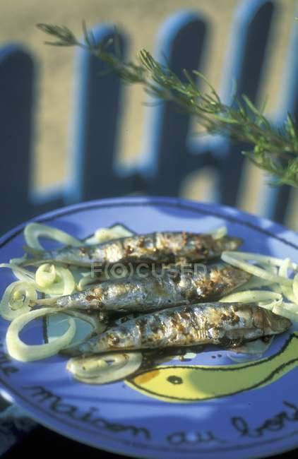 Жареные сардины с луком — стоковое фото