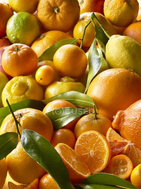 Fresh citrus fruits in heap — Stock Photo