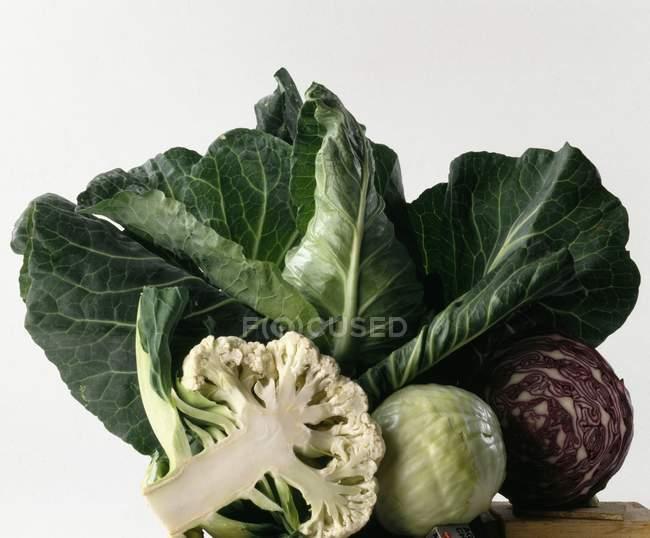 Разнообразие свежей капусты — стоковое фото